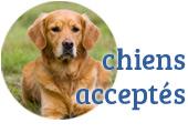 chiens acceptés